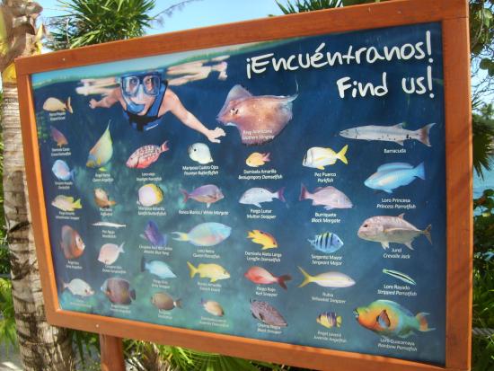 Xel Ha Types of Fish